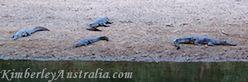 Crocodiles in Windjana Gorge