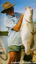 And another big Barramundi fish