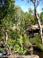 Mertens Creek