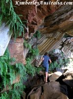 Ferns on the patterned rock face underneath Mertens Falls