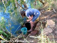 Collecting drinking water from Mertens Creek on the Mitchell Plateau