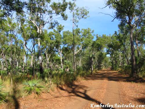 The Mitchell Plateau Track