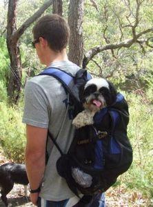 Hiking with Roxy (who keeps up with her Border Collie friend most of the day!)