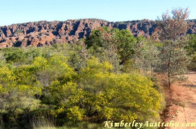The Bungles in May