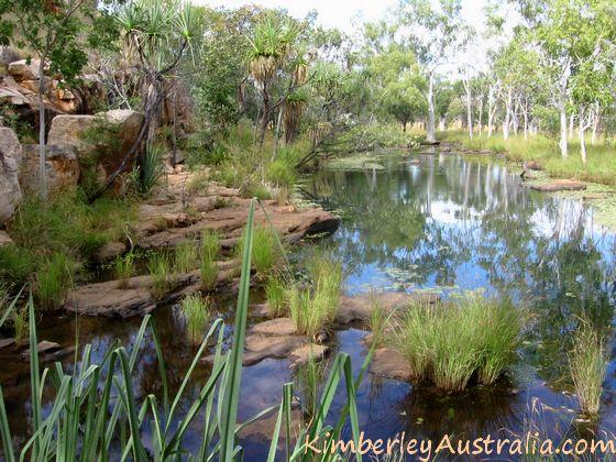 Adcock River - lily pond