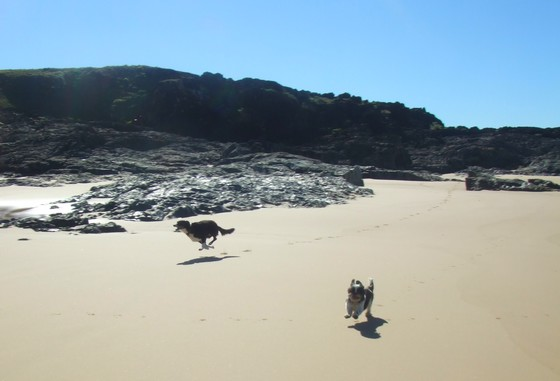 Dogs on a Kimberley Beach