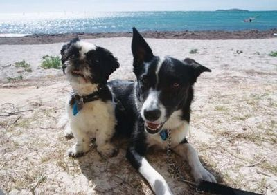 Roxy and Rusty want to see the Gibb River Road