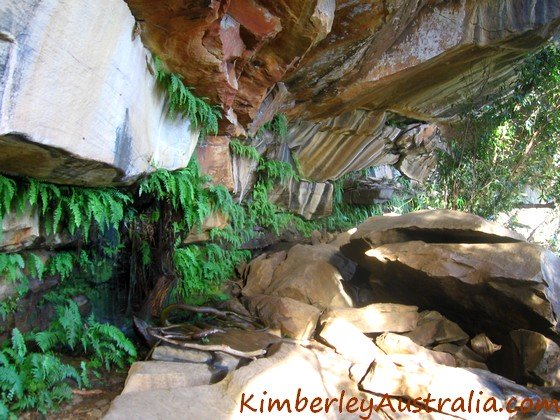 Ferns and pretty patterns on the rocks underneath Little Mertens Falls